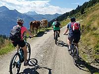 Natur-Erlebnisse auf MTB-Touren in den Alpen
