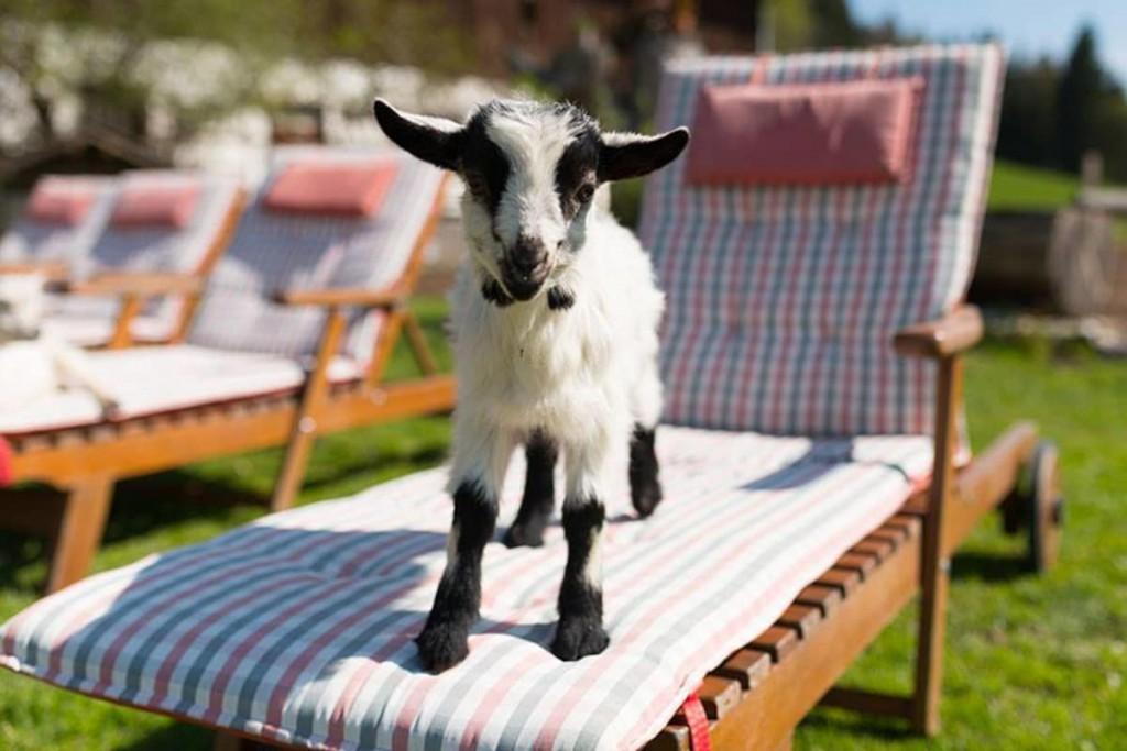 Leben mit Tieren - auf einem Bauernhof gehören sie dazu