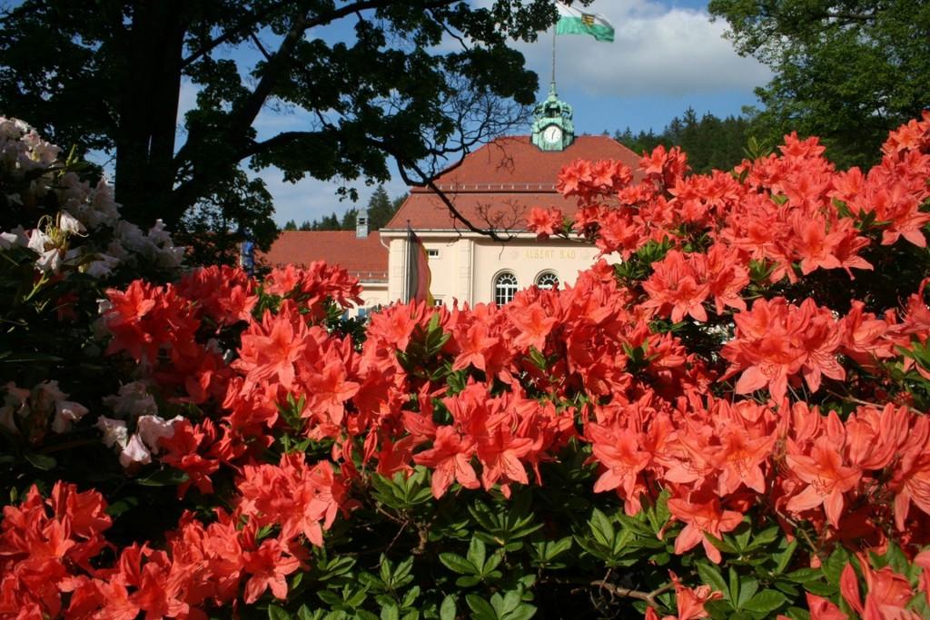 Die berühmte Rhododendronblüte in Bad Elster